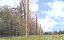 Deer Fence picture